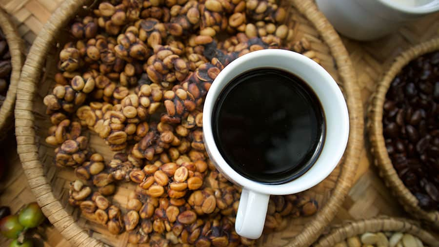 What is Kopi Luwak and Why is it so Expensive? - TravelToogle